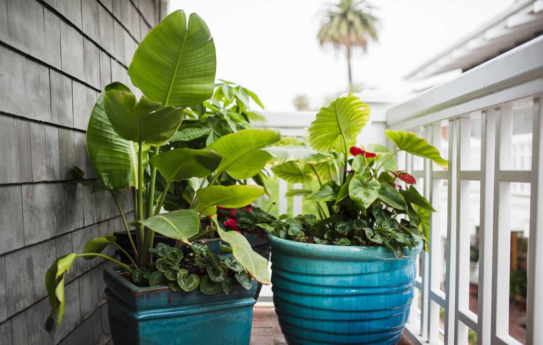 potted plants @ inn on summer hill, santa barbara coast lodging